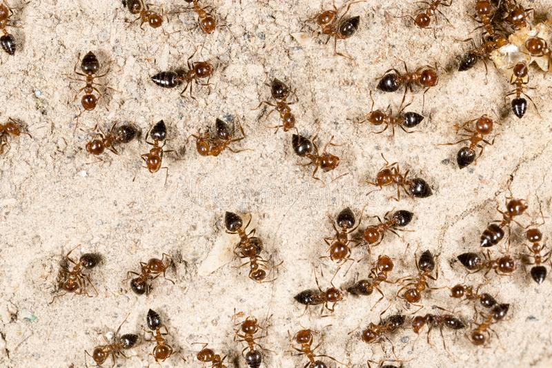 A lot of ants on the ground royalty free stock image