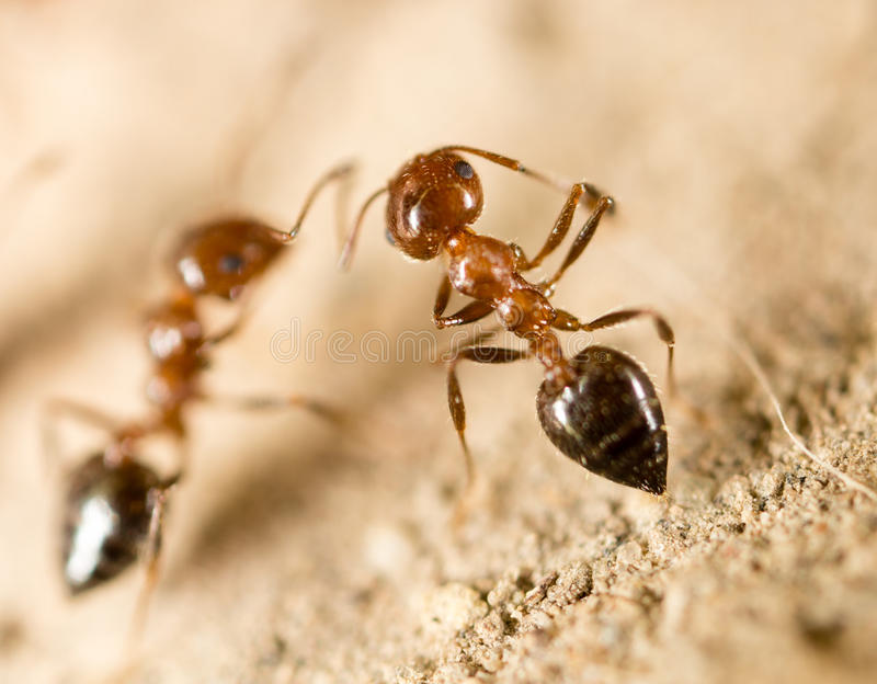 A lot of ants on the ground royalty free stock images