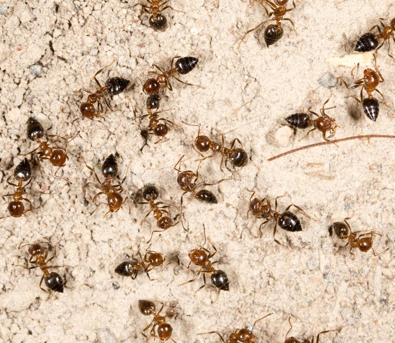 A lot of ants on the ground stock photography