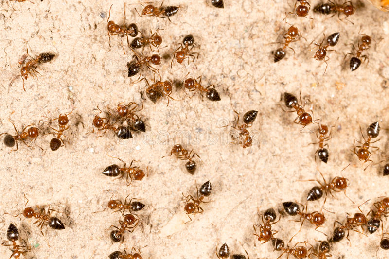 A lot of ants on the ground royalty free stock photos