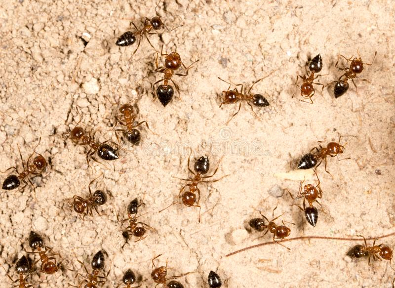 A lot of ants on the ground royalty free stock photography