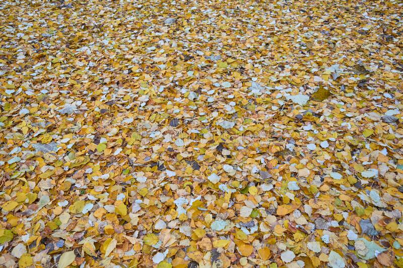 A lot of autumn leaves of different colors are lying on the ground royalty free stock photos