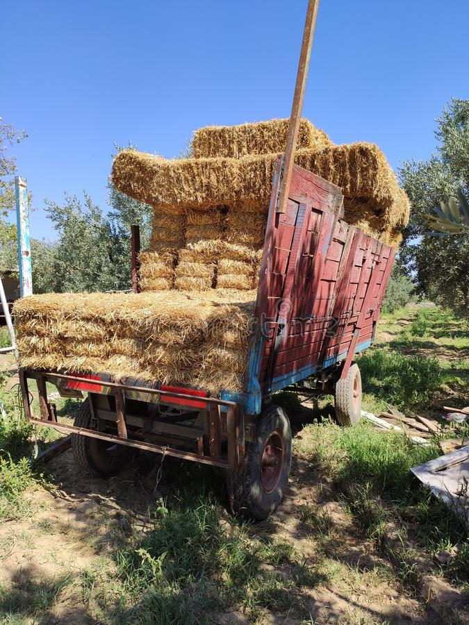 A lot of bales of fresh straw or hay in the trailer on the background of a green forest. Tractor Trailer full of yellow fragrant s. Traw. The trailer is breaking stock photos