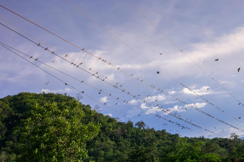 A lot of birds sitting, singing and preening together royalty free stock image