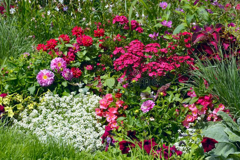 Lot of blooming different flowers and plants stock image