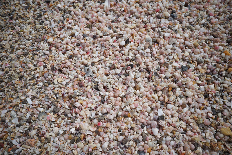 A lot of broken small corals, scrap of sea shell on the sand at prachuapkhirikhan, thailand royalty free stock photos