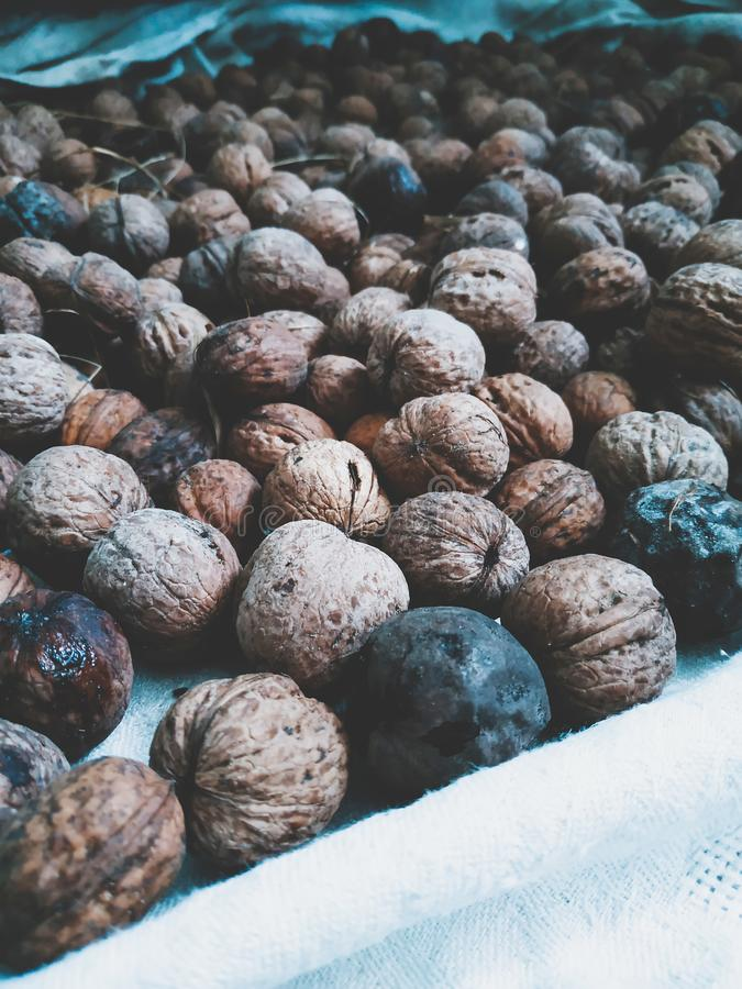 A lot of brown walnuts. Natural walnut background. Abstract walnuts background stock photography