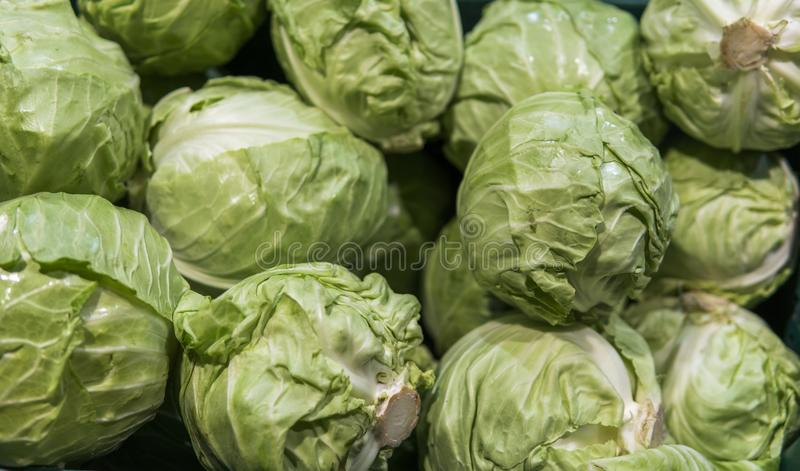 A lot of cabbage at market place. Cabbages background. Fresh cabbage from farm field. Vegetarian food concept. Healthy stock image