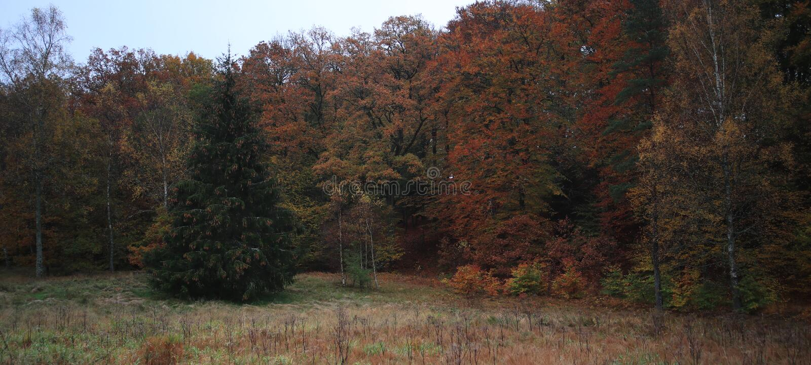 A lot of color in the woods when autumn comes,. From red, yellow, green to brown and black. With a sky blue gray, the colors shine even sharper stock photos