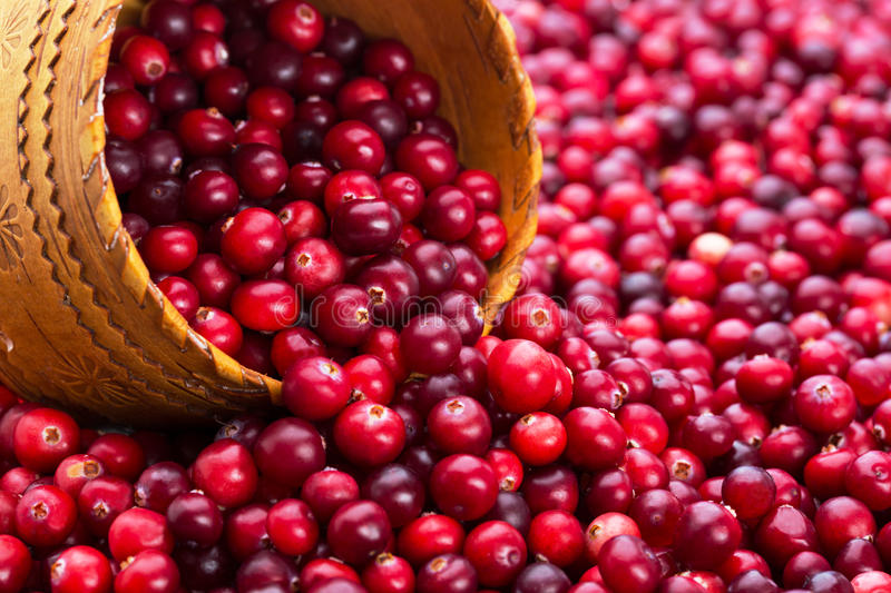 A lot of cranberry with elm wood royalty free stock image
