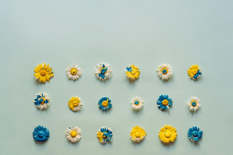 A lot of daisies laid out on a pastel blue background stock photos