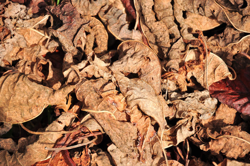 Download Lot of dry leaves stock photo. Image of autumn, november - 39511556