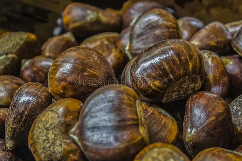 A lot of edible chestnuts royalty free stock photos