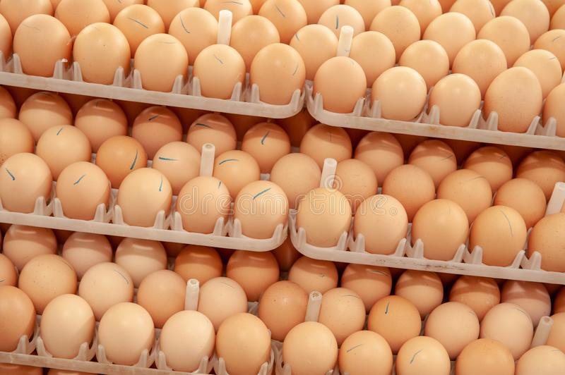 Lot of eggs on tray from breeders farm. Eggs in production line of selecting quality and healthy egg process in breeders incubation plant royalty free stock photography