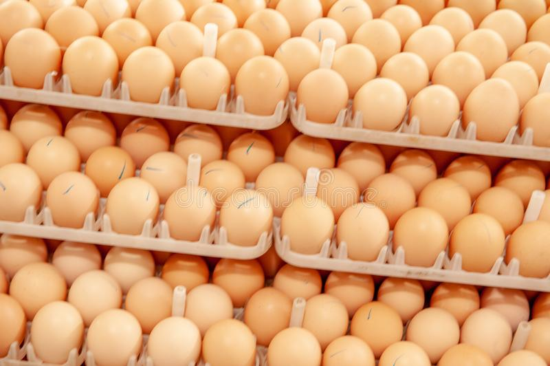 Lot of eggs on tray from breeders farm. stock photos