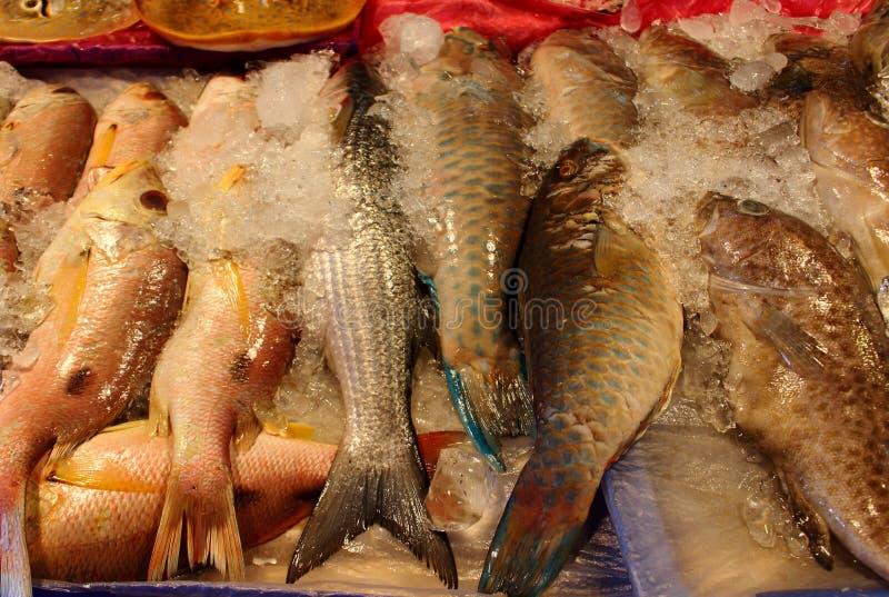 Pile of fresh sea fish on market royalty free stock image