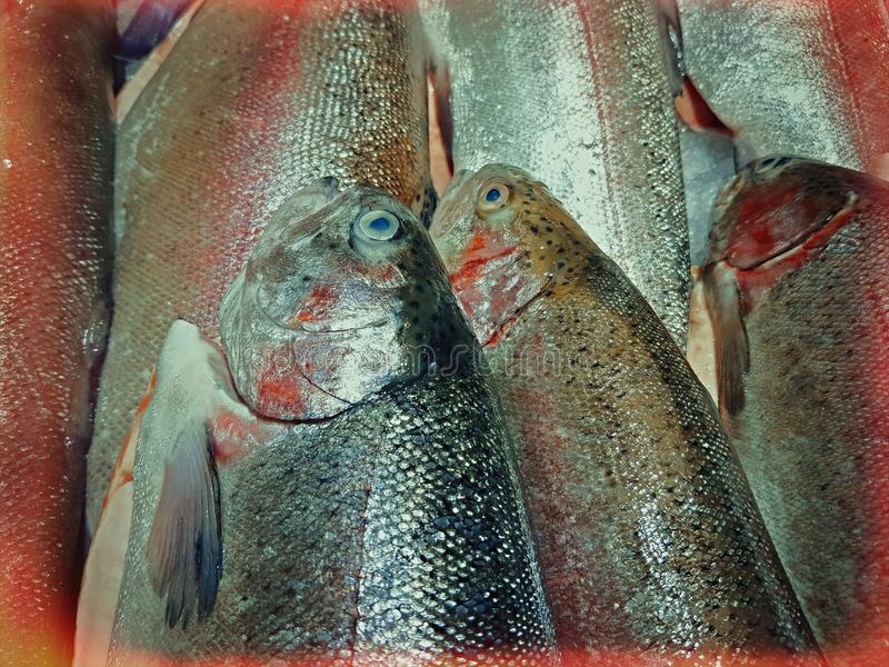 Freshly caught fish with ice on store shelve. A lot of fresh raw fish on store shelve with ice royalty free stock photo