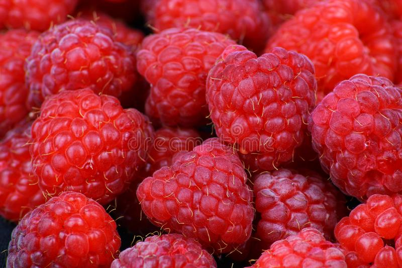 A lot of fresh red raspberries royalty free stock photo