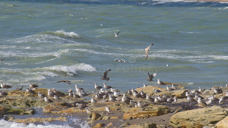 Lot of gulls royalty free stock image