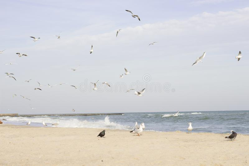 Lot i życie frajery na Czarnym morzu obrazy stock