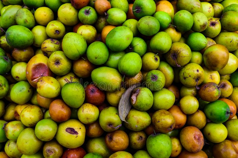 A lot of jujube or chinese date. royalty free stock photos