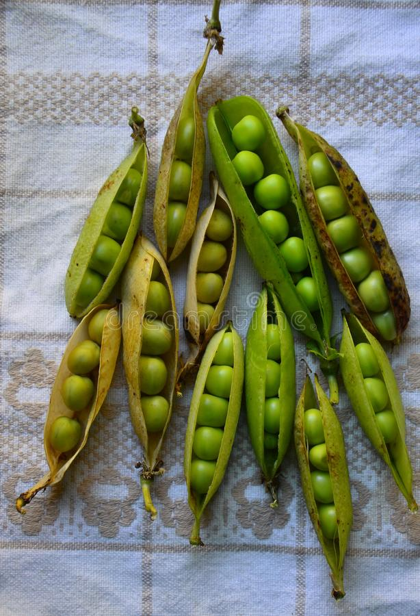 A lot of matured pods of peas on the tablecloth laid. stock image