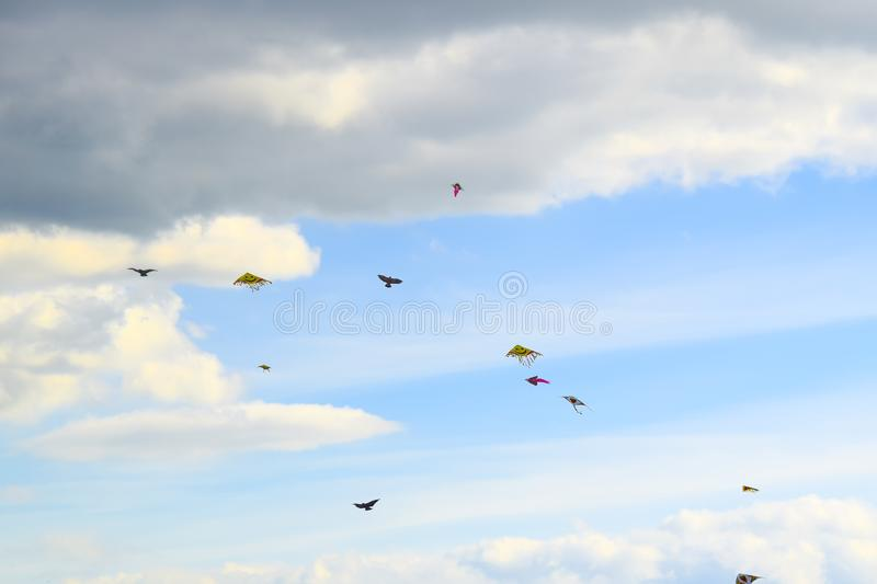 Lot of multi-colored kites in the sky vertical background royalty free stock image