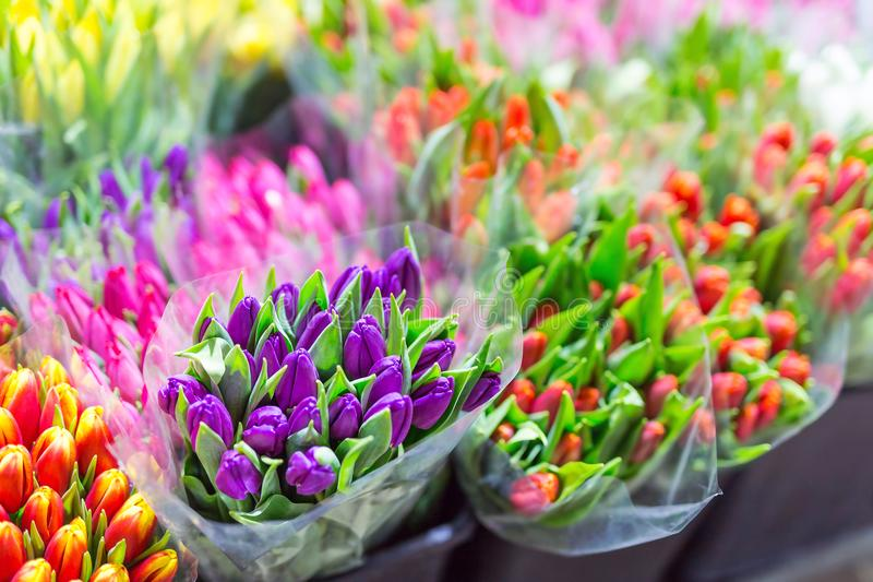 Lot of multicolored tulips bouquets. Flower market or store. Wholesale and retail flower shop. Florist service. Woman day stock images