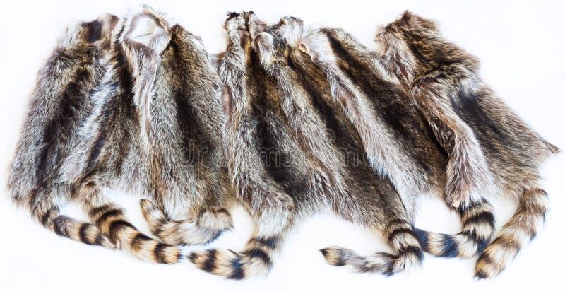 Lot of natural raccoon pelts stock photos