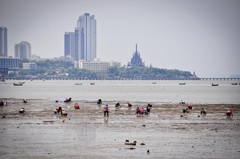 A lot of people in closed clothes, which are collected in the sea manually crustaceans in Thailand. A lot of people in closed clothes who collect in the sea royalty free stock photos