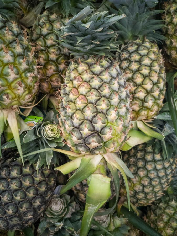 A lot of pineapple piles up royalty free stock images