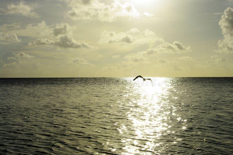 Lot Ptak zdjęcie stock