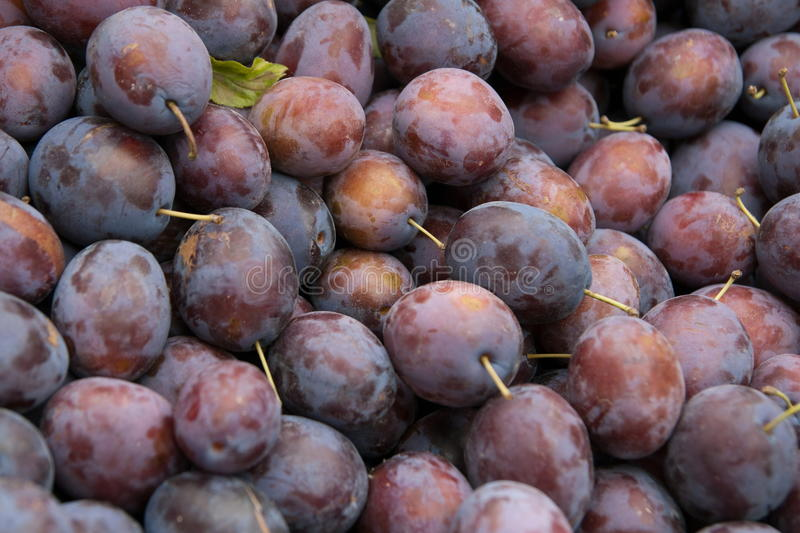 A lot of a purple plums royalty free stock image