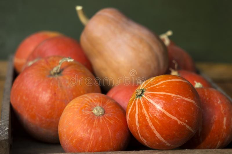 A lot of red ripe pumpkins on a old wooden green background close up, holiday halloween. Pile of ripe pumpkins. Harvest autumn. Wallpaper royalty free stock photography