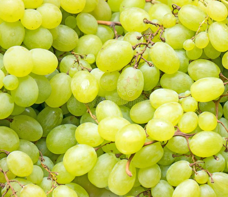Lot of ripe green grapes. Lot of ripe green grapes in the supermarket stock image