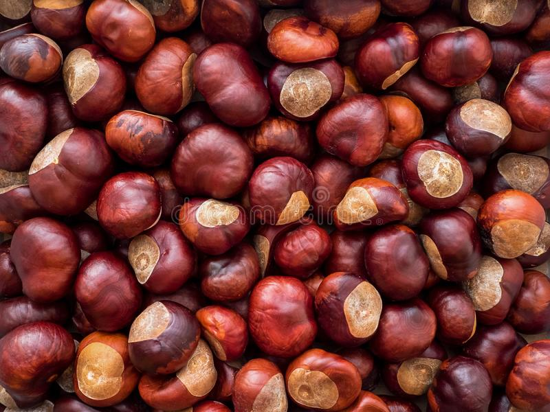 A lot of ripe peeled brown chestnuts background royalty free stock photos
