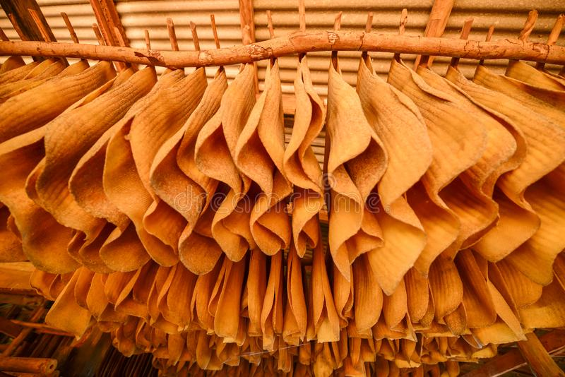 A lot of rubber sheet dry hanging on wood rack. Warm tone. Backgrounds, Texture. Shallow dept of field. Low angle view royalty free stock photo