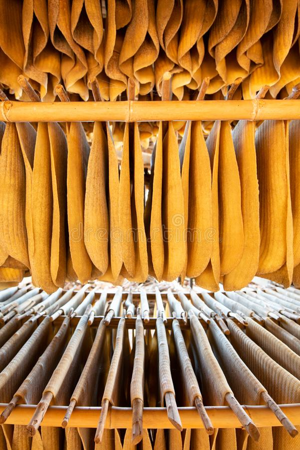 A lot of rubber sheet dry hanging on wood rack. Warm tone. Backgrounds, Texture. Shallow dept of field. Wide angle view.  royalty free stock photography