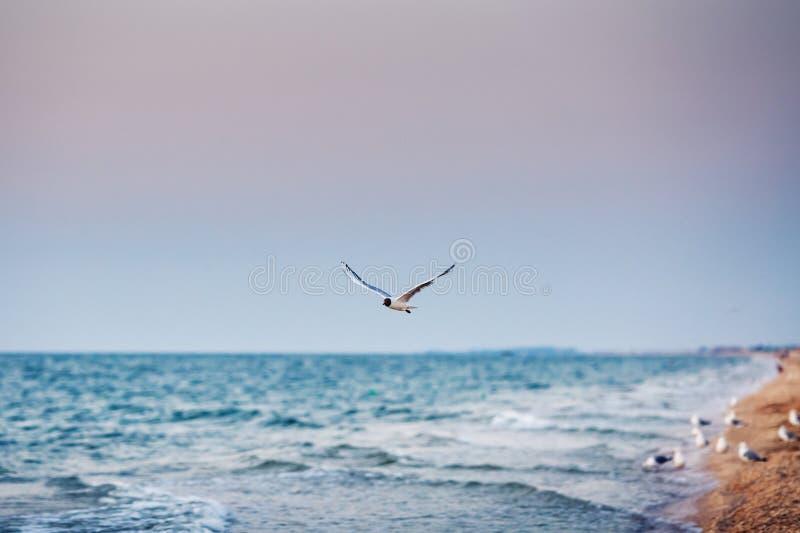 Lot seagull nad morzem obrazy royalty free