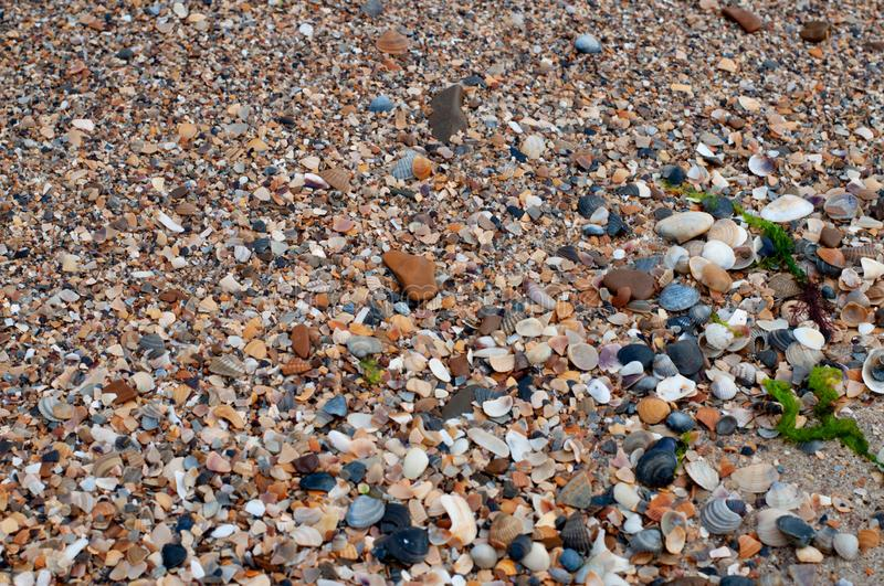A lot of seashells of different shapes royalty free stock images