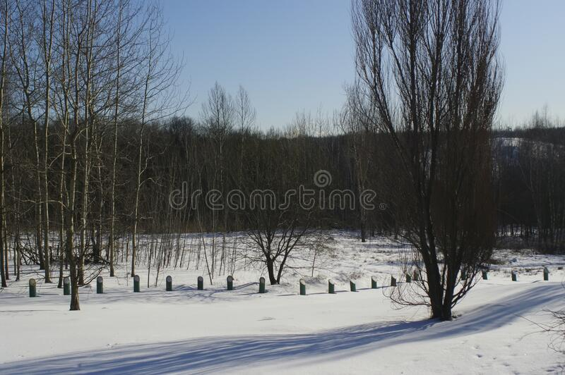 A lot of snow in the forest on a clear day. Moscow stock photo