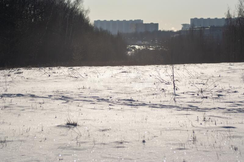 A lot of snow in the forest on a clear day. Moscow royalty free stock photography