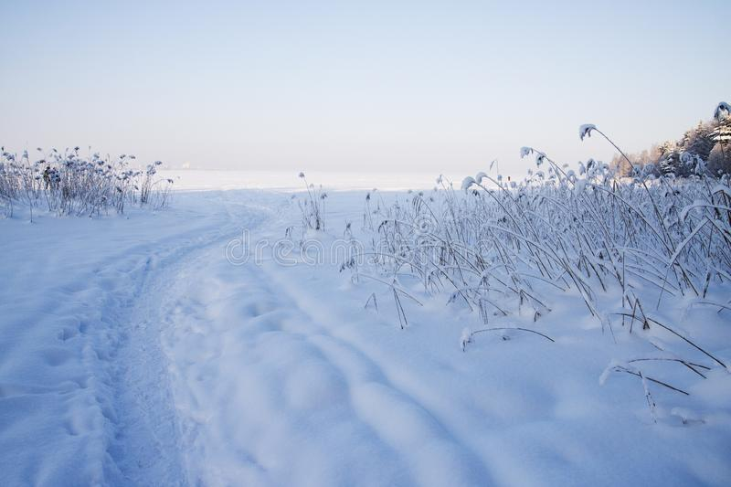 Very cold, even more colder. Lot of snow, winter mood and cold landscape. Bush is under the snow stock photos