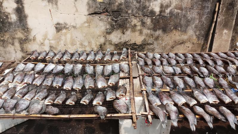 Sun-dried fish trichogaster pectoralis, Food preservation in Thailand royalty free stock images