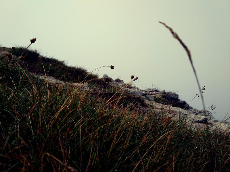 Melancholy, raw mountain meadow with rust grass among rocks. Beauty background bright environment evening field grass landscape light melancholy mountain royalty free stock images