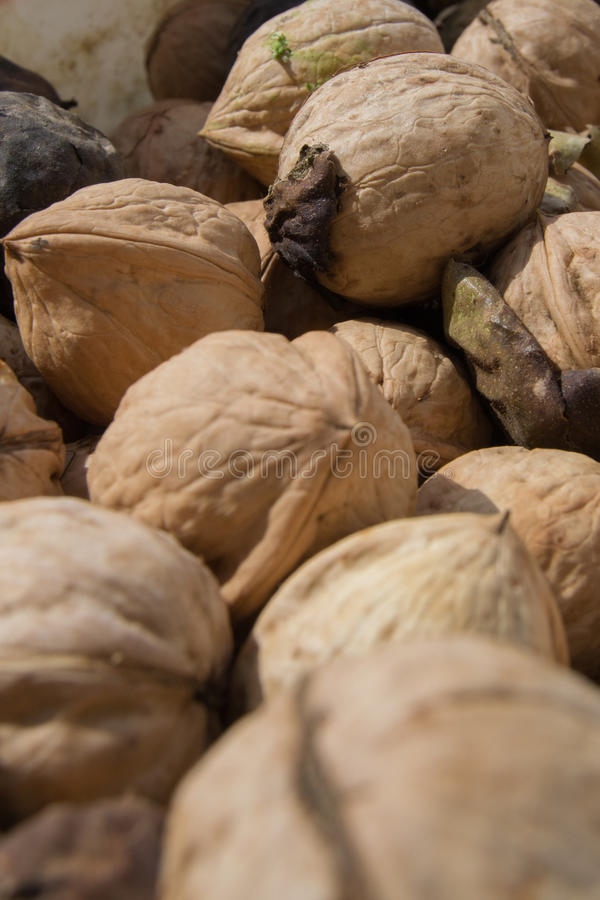 A lot of walnuts stock images