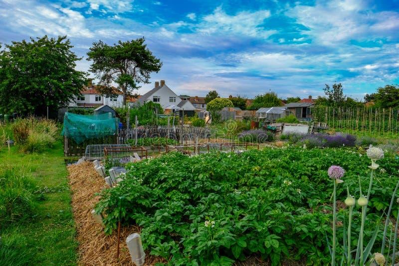 Lote da atribuição com a colheita das batatas e das cebolas no foregroun imagens de stock royalty free