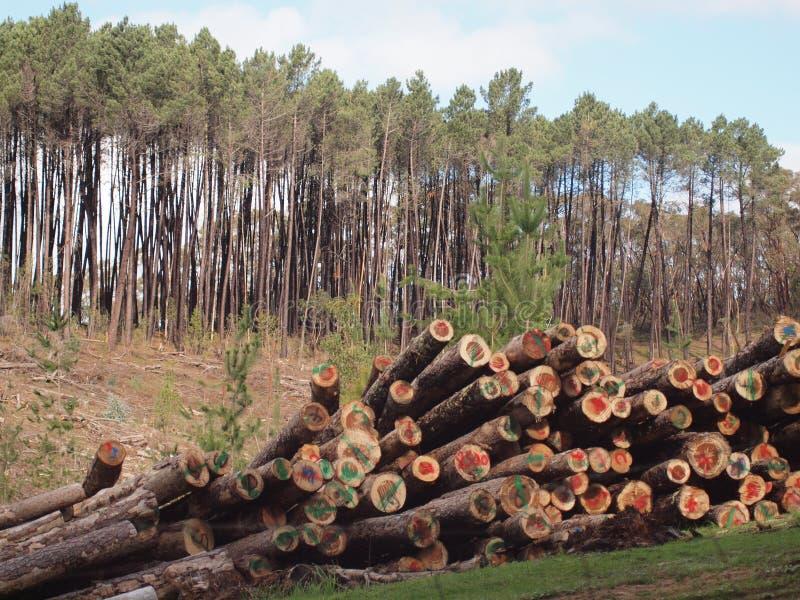 Lote da madeira fotos de stock