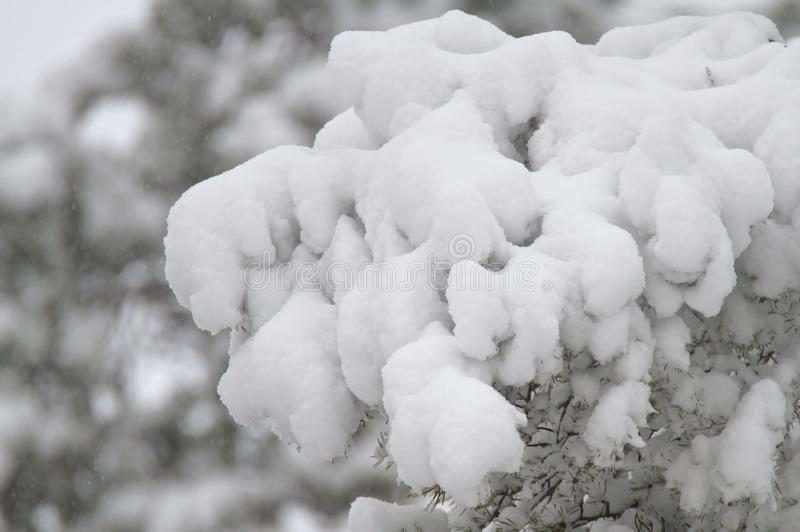 Lote da neve em um ramo imagens de stock