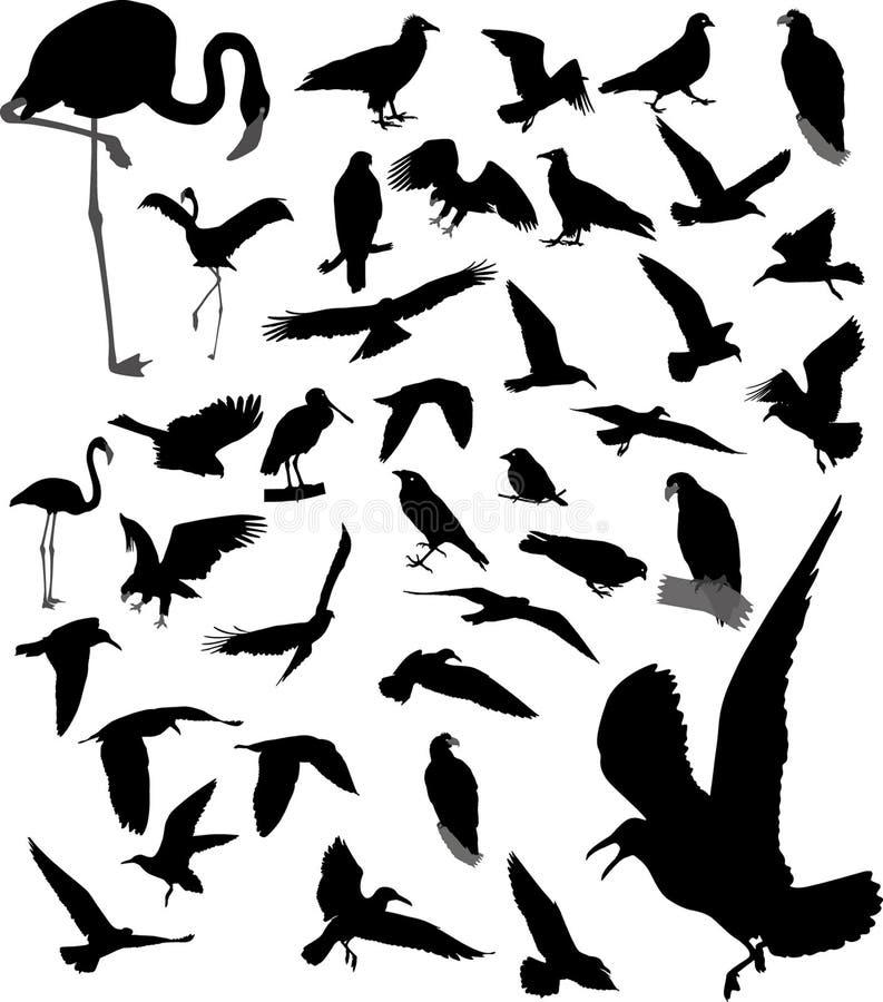 Lote das silhuetas dos pássaros ilustração stock